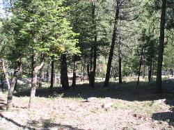 AWESOME UPPER CANYON LOT NEAR HISTORIC BIG ROCK & RIVER