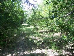 45 ac. HUNTING TRACT