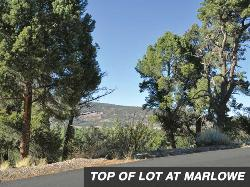 NICELY WOODED DOWNSLOPE LOT - MARLOWE